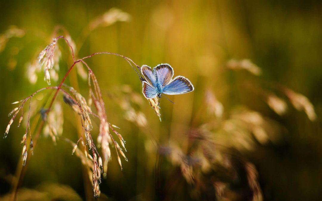Blühwiesenupdate – Aussaat im Frühjahr 2021